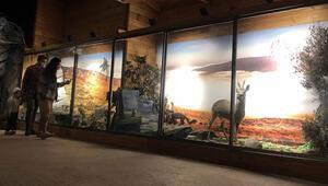 Nadir tabiat varlıklarını gelecek nesillere taşıyan müze