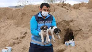 Belediye ekipleri 10 yavru köpeği sıcak yuvaya kavuşturdu