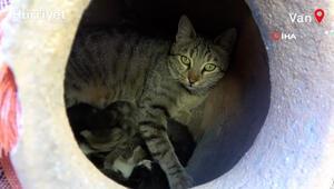 Anne kedi, dekoratif küpün içinde dördüz yavru doğurdu