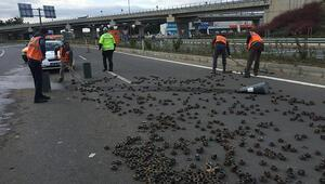 Tırın üzerindeki yüzlerce somun yola saçıldı