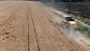 Tohum desteği ile çiftçilerin yüzü gülüyor