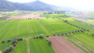 Muğla'da bu yıl 210 bin dekar tarım arazisi sulandı
