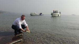 İzmit Körfezi'ne 5 bin balık bırakıldı