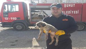 Kanalizasyon borusuna sıkışan yavru köpeği itfaiye ekipleri kurtardı