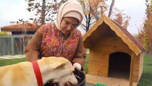Emine Erdoğanın sahiplendiği Leblebi, Külliye bahçesinde