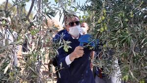 Kaymakam Aytemürdan zeytin üreticilerine ziyaret