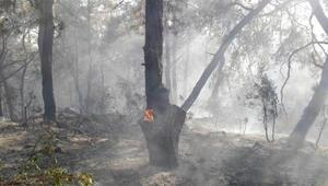 Manavgatta orman yangını