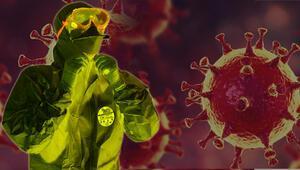 Son dakika haberler: Bilim insanları açıkladı Koronavirüs neden bu kadar ölümcül  Virüs insan vücudunu aldatabiliyor.