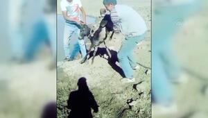 İnsanlık dışı görüntüler Bir de sosyal medyadan paylaştılar