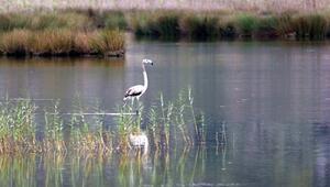 Demrede flamingo heyecanı