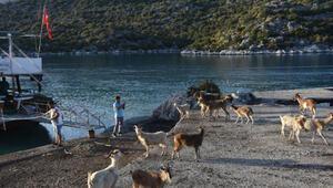 Aşırlı Adasındaki dağ keçilerine yiyecek ve içecek bırakıldı