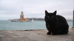 Dünya Kara Kedi Günü ne zaman İşte tarih bilgisi