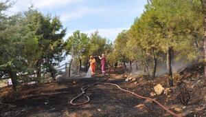 Gazipaşa Polis Hatıra Ormanında yangın