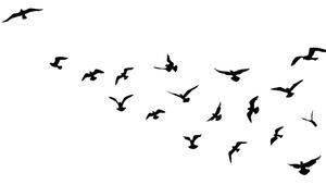 Amazonda böcek yiyen kuş türleri yok olma tehlikesi altında