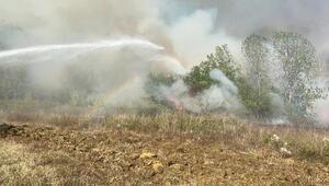 Son dakika... Samsun'da orman yangını... 4 noktadan müdahale edildi