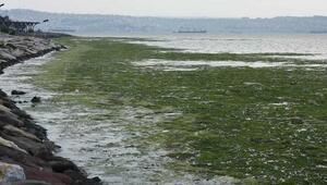 Karşıyakada sahili yosunlar bastı