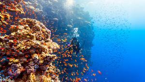 Avustralyada 500 metre yüksekliğinde yeni bir resif keşfedildi