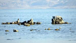 Son dakika haberleri... Van Gölünde şaşırtan manzara Görenler fotoğrafını çekiyor