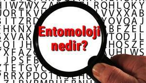 Entomoloji nedir ve neyi inceler Entomoloji (Böcek Bilimi) hakkında kısaca bilgiler