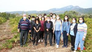 Kızılçullu öğrencilerinden sahada tarımsal araştırma