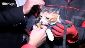 Yılmaz Erbek Apartmanının enkazından arama köpeğinin bulduğu kedi, kurtarıldı