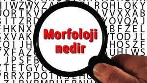 Morfoloji nedir ve neyi inceler Morfoloji hakkında kısaca bilgiler