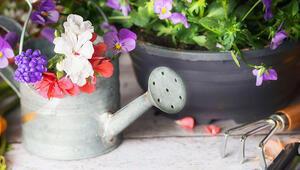 Evinizde kolayca yetiştirebileceğiniz faydalı bitkiler