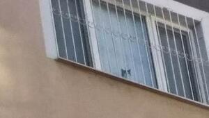 Kontrollü yıkım çalışmalarında bir kedi 8'inci kattan aşağıya atladı