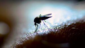 1 milyar insan sivrisinekler yüzünden hastalanabilir