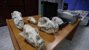 Adnan Oktarın kaçak fosilleri 417 milyon yıl öncesine ait çıktı