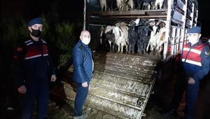 Çalındı dedi koyunları sattı