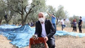 Mudanya Belediyesinden zeytin üreticisine 356 bin lira destek