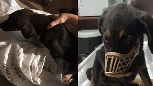 Vicdansızlar Yavru köpeği çuvala koyup, seyir halindeki araçtan attılar