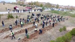 Kütahya'da 2 bin 53 fidan toprakla buluştu