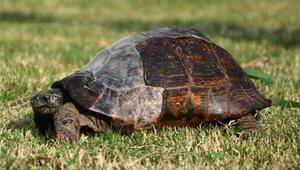 Yaralı kaplumbağa Doğa Koruma ve Milli Parklar Şubesine teslim edildi