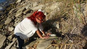 Çanakkale'de müthiş keşif 9 milyon yıl öncesine ait…