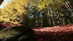 Samsunun Nebiyan Dağı ziyaretçilerini sonbahar renkleriyle karşılıyor