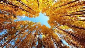 Sonbahar Bitliste farklı güzellikler ortaya çıkardı