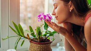 Zihinsel Sağlığınızı İyileştiren Çiçekler