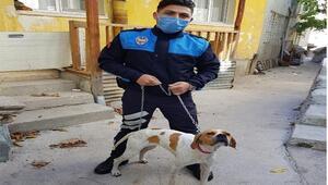Sopayla işkence edilen köpeği zabıta görevlisi sahiplendi, saldırgana para cezası kesildi