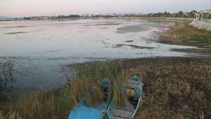 Beyşehir Gölünde sular çekildi, kıyılarda sazlıklar oluştu