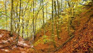 Demirci ormanlarında hazan şöleni