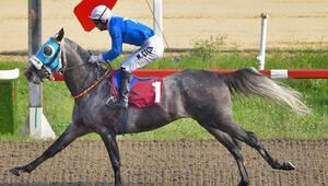 Ankarada muhteşem cumartesi Şampiyon atlar...