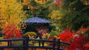 Konyadaki Kuğulu ve Japon Parkı hazan renklerine büründü