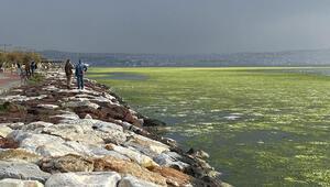 Son dakika haberler: İzmirde şaşkına çeviren görüntü.. Tüm sahili kapladı..