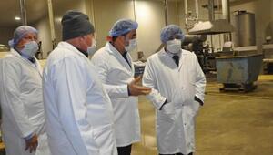 Kaymakam, patates işleme fabrikasını inceledi