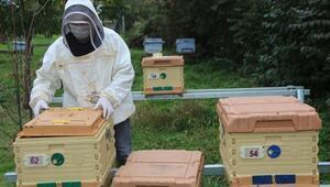 Arı kovanları da akıllandı: Hırsızlığı bitirecek