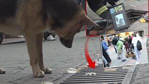 Son dakika haberler: İzmitte devamlı olarak mazgalı izleyen köpeğin sırrını esnaf çözdü...  Ekipler kameralarla inceleme yapmıştı...