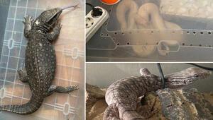 Bakırköyde ticareti yasaklanan 12 hayvan ele geçirildi
