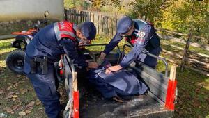 Jandarma, yaralı karacanın üzerine üşümemesi için montunu örttü